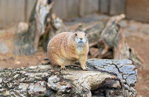 Zoo, Animals, Fur Animals, Animal World, Wild Animal