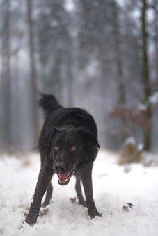 Dog, Winter, Snow, Animals, Cold, Nice, Fur, Figure