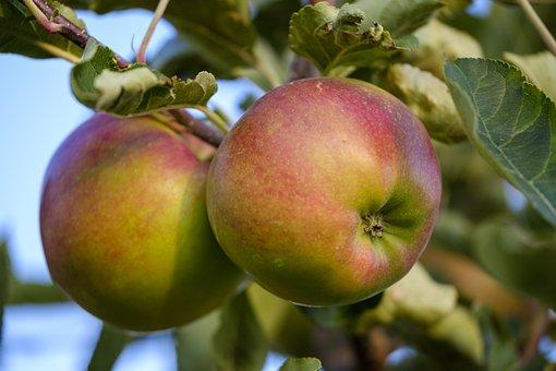 Apple, Fruit, Pome Fruit, Ripe, Healthy, Vitamins, Food
