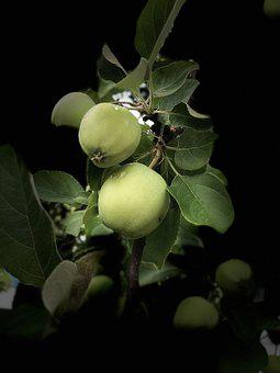 Apple, Fruits, Healthy, A Delicious, Harvest