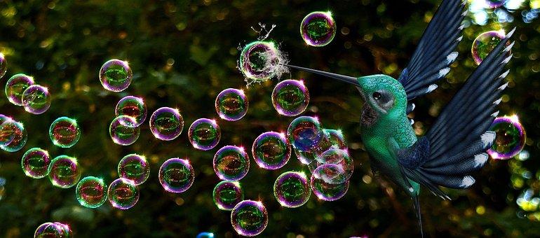 Soap Bubbles, Bird, Burst, Fantasy, Hummingbird