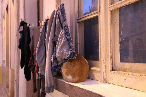 Cat, Clothes, House