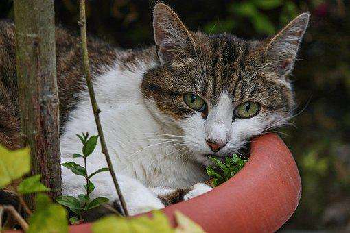 Cat, Domestic Cat, Flowerpot, Is, Attention, View