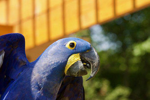 Bird, Parrot, Exotic, Plumage, Colorful, Nature