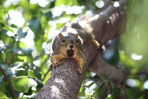 Squirrel, Nature, Tree, Animal, Wildlife, Forest, Cute