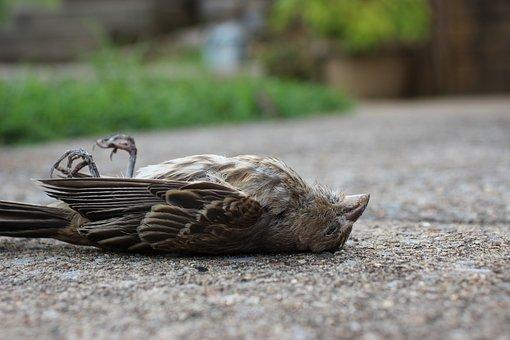 Bird, Dead Bird, Death