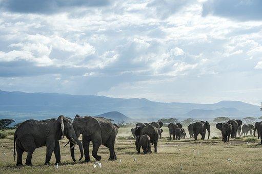 Elephant, Animal, Thailand, Fangs, Nature, Desert