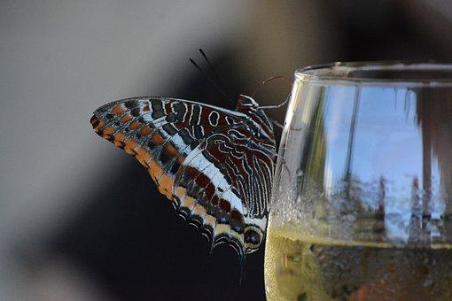 Butterfly, Wine, Glass, Wine Tasting, Break, Eat, Drink
