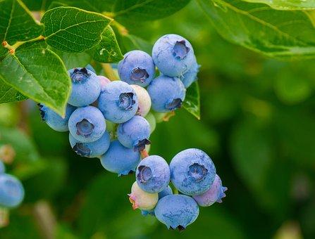 Berries, Blueberries, Vitamins, Healthy, Food