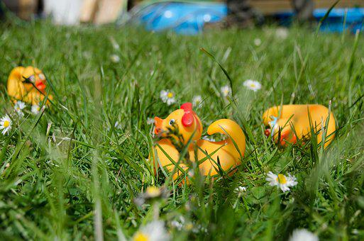 Garden, Summer, Flower, Meadow, Spring, Play, Duck