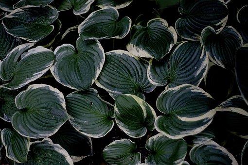 Foliage, Decorative, Dashing, Leaf, Geometric, Plant