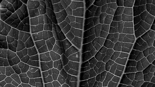 Leaf, Leaf Texture, Grain, Sw, Black White, Veins