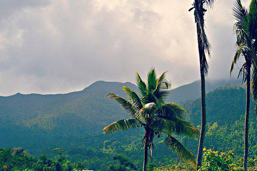 Mountain, Palm Tree, Stormy, Green, Forest