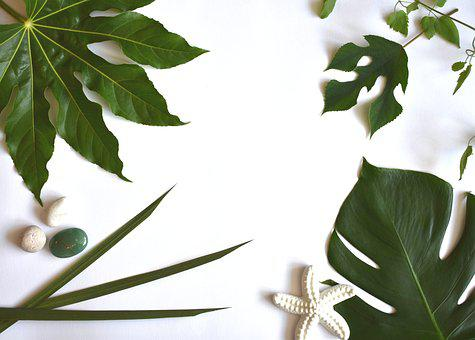 Tropical, Leaves, Green, Exotic, Summer, Plants
