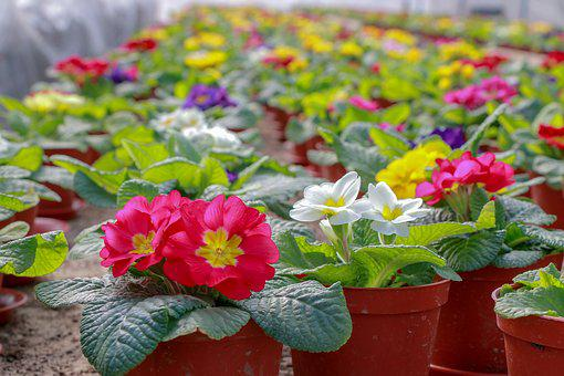 Flowers, Greenhouse, Plant, Greens, Garden, Summer