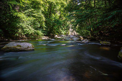 River, Bach, Waters, Landscape, Nature, Forest, Scenic