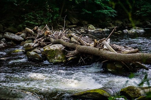 River, Bach, Water, Landscape, Nature, Forest, Scenic