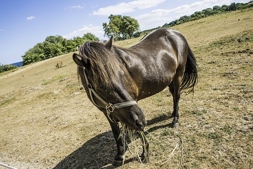 Horse, Animal, Coupling, Nature, Sky, Grass, Landscape