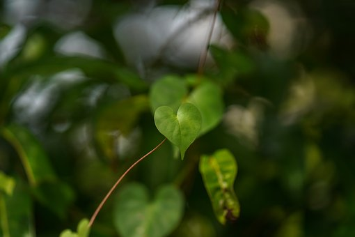 Leaf, Tree, Close-up, Nature, Branch - Plant Part