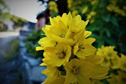 Sky, Green, Flowers, Nature, Summer, Landscape, Heaven