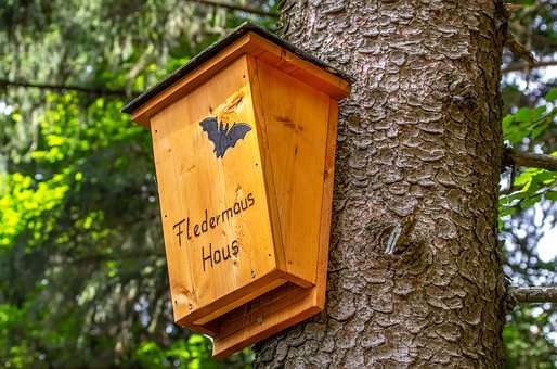 Bat, House, Accommodation, Nature, Home, Forest, Tree