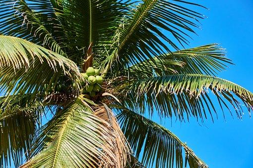 Rio De Janeiro, Brazil, Palm, Beach, Sun, Environment