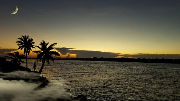 Ocean, Palm Trees, Beach, Water, Paradise, Landscape