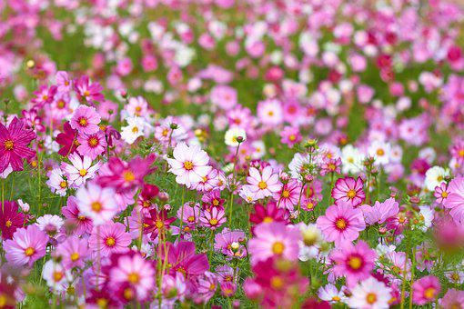 Flowers, Pink, Landscape, Nature, Blossom, Bloom, Plant
