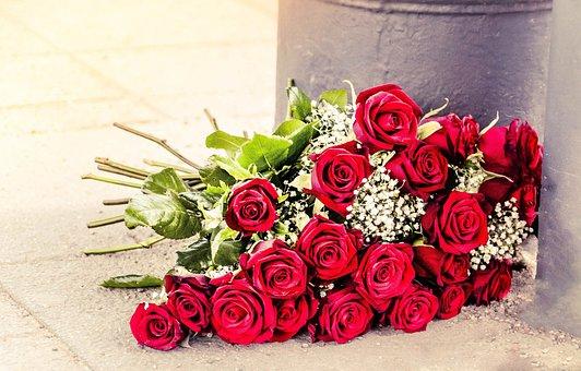 Roses, Summer, Red, Nature, Garden, Ripe, Blossom