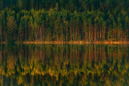 Forest, Lake, The Stage, Reflections, Beautiful, Green