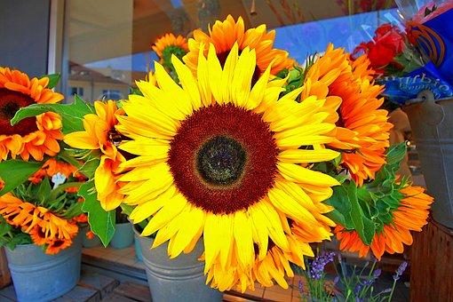 Flowers, Sunflower, Close Up, Summer, Yellow, Plant