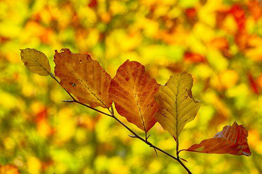 Nature, Leaf, Tree, Time Of Year, Autumn, Branch