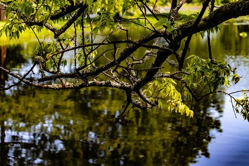 Water Reflection, Branch, Pond, Water's Edge, Lake