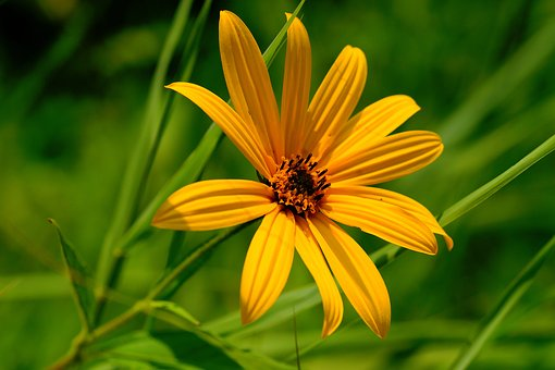 Blossom, Bloom, Yellow, Nature, Flower, Garden, Summer