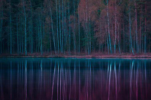Forest, Lake, Autumn, Water, Nature, Landscape, Forests