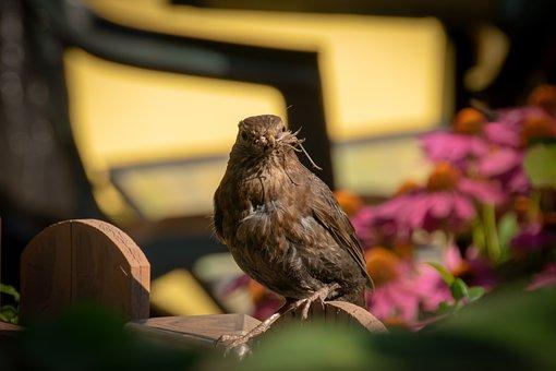 Small, Bird, Animal, Nature, Cute, Chicks, Wildlife