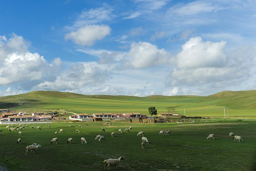 Prairie, Blue Sky And White Clouds, Weather, Color