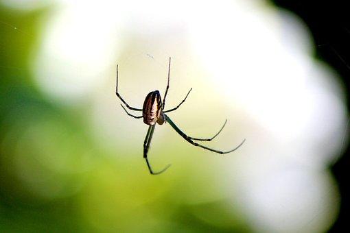 Spider, Nature, Insect, Cobweb, Bug, Botany, Legs