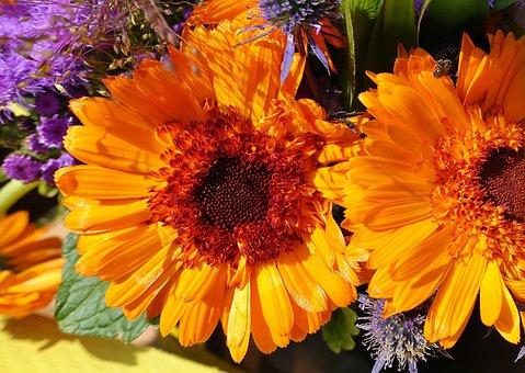 Dahlia, Summer Flowers, Colorful, Color, Garden, Summer
