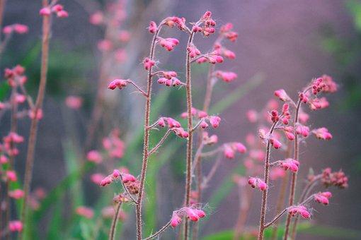 Flower, Flowers, Nature, Garden, Pink, Purple, Color
