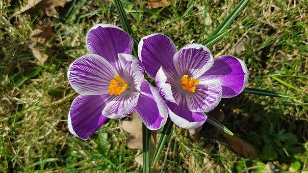 Spring, Flowers, Meadow