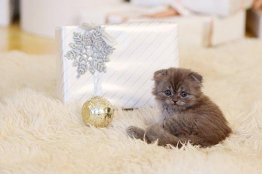 Cat, Kitten, New Year's Eve, Gift, Furry, Cute, Pet
