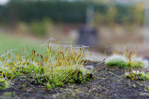 Moss, Drop Of Water, Cobweb, Green, Nature, Drip