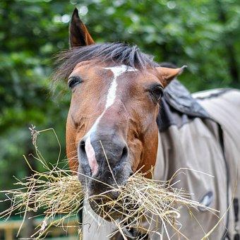 Horse, Eat, Funny, Head, Hay, Fun, Equine, Animal