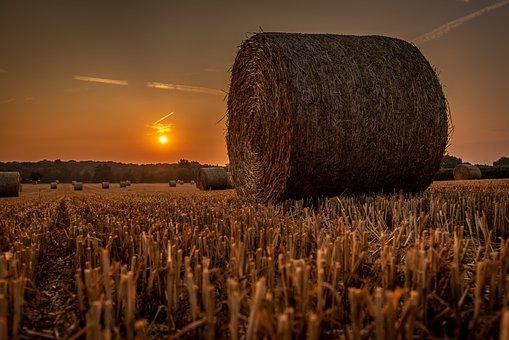 Sunrise, Cornfield, Landscape, Lighting, Backlighting