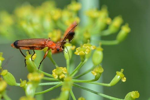 Beetle, Macro, Insect, Nature, Animal World, Flying