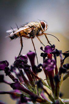 Macro, Macro Photography, Nature, Nature Photography