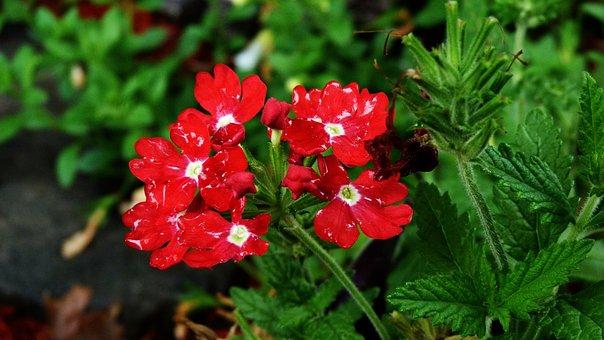 Flower, Nature, Garden, Plants, Pink, Close, Spring