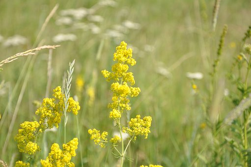 Flowers, Grass, Meadow, Field, Summer, Nature, Herbs
