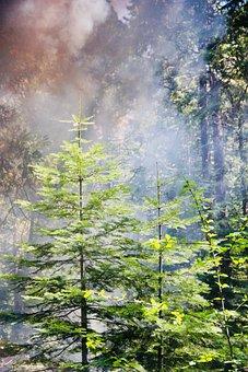 Yosemite, Nature, Smoke, Fire, Disaster, Flammable
